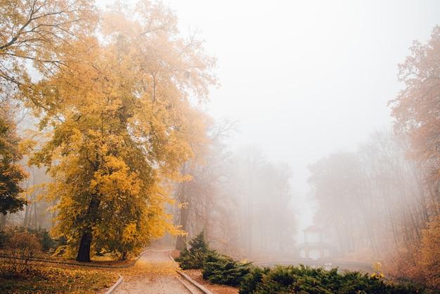 Paisagem nublada de outono