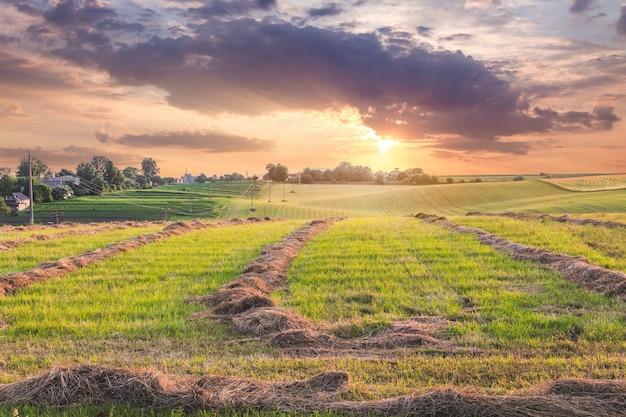 Paisagem panorâmica: campo com grama chanfrada ao pôr do sol