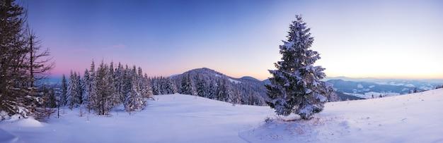 Paisagem pitoresca de um bosque nevado crescendo nas colinas entre o pôr do sol rosa-roxo de nevascas em uma noite gelada de inverno.