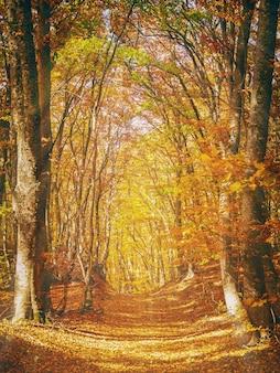 Paisagem pitoresca e colorida de floresta de outono