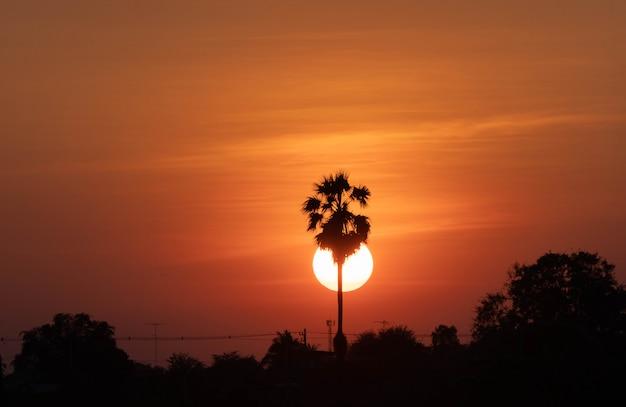 Paisagem por do sol com silhueta de árvore de palma