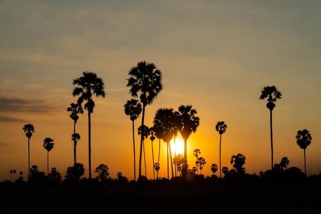 Paisagem por do sol com silhueta de árvores de palma