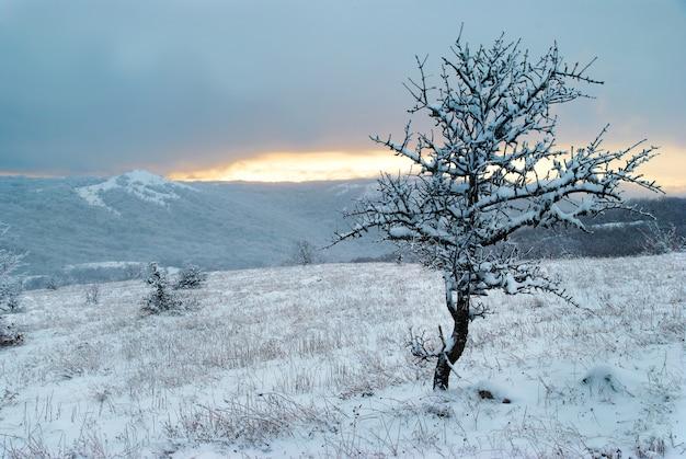 Paisagem-pôr do sol de inverno nas montanhas de inverno e na floresta gelada.