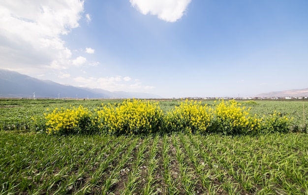 Paisagem prado verde