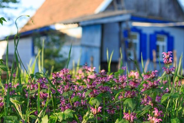 Paisagem rural, com, florescente, capim, e, um, casa rústica, em, a, fundo