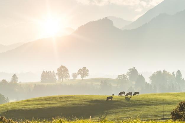 Paisagem rural com vacas