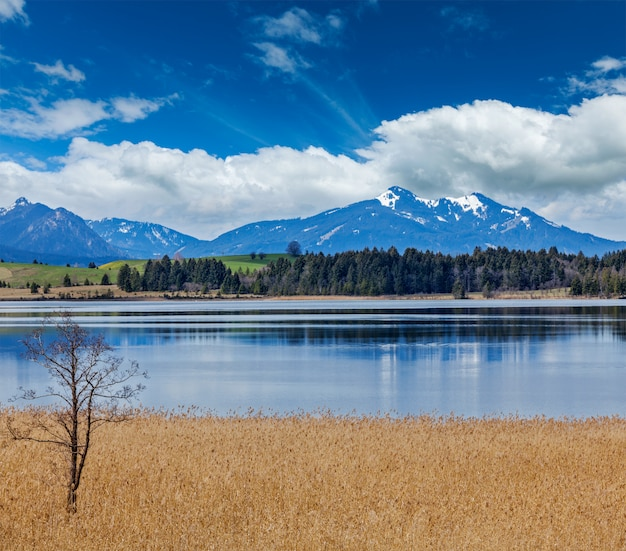 Paisagem rural de alpes da baviera Foto Premium