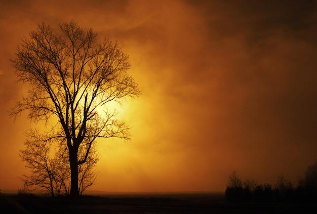 Paisagem rural de inverno ao nascer do sol