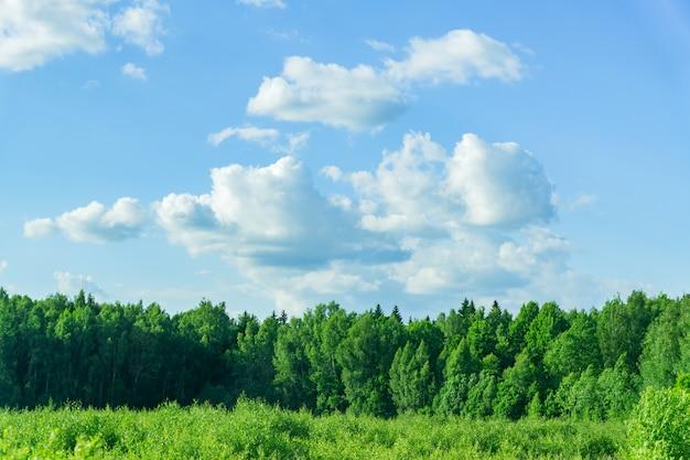 Paisagem rural em dia de sol. floresta verde e céu com nuvens.