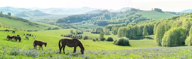 Paisagem rural matinal, cavalos pastando em um prado primavera, vista panorâmica