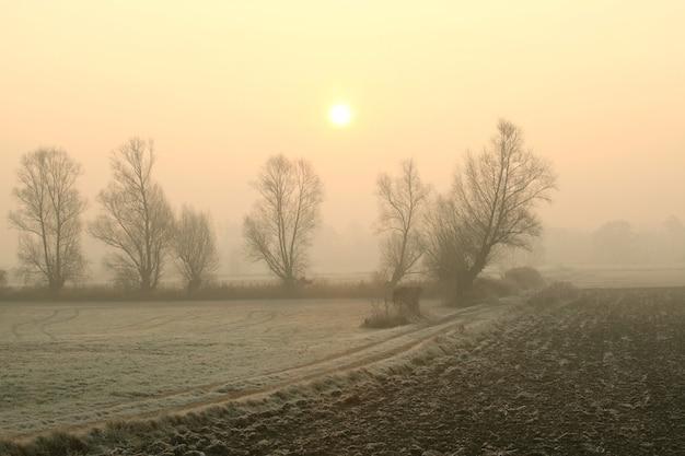 Paisagem rural na nebulosa manhã de novembro