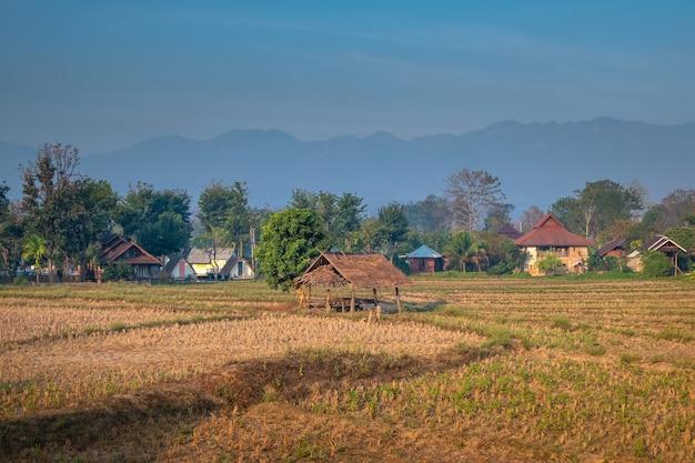 Paisagem rural no norte da tailândia. campos de arroz colhidos com aldeia e montanhas ao fundo.