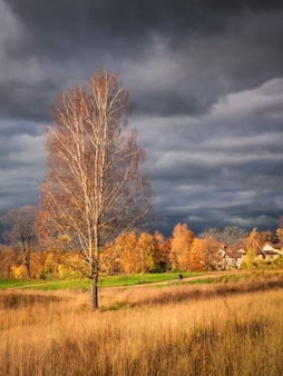 Paisagem rústica de outono brilhante com uma árvore alta na estrada. céu escuro sobre a vila antes da tempestade. visão vertical.