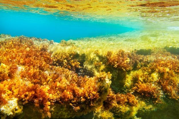 Paisagem subaquática de anêmona de ibiza formentera