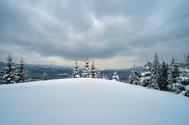 Paisagem temperamental com pinheiros cobertos de neve fresca caída na floresta de montanha de inverno na noite fria e sombria.