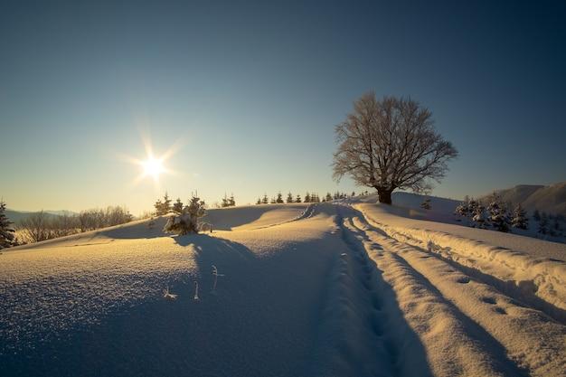 Paisagem temperamental com trilhas e árvores escuras nuas cobertas com neve fresca caída na floresta de montanha de inverno na noite fria e sombria.