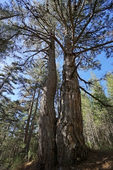 Paisagem típica de floresta e natureza no parque nacional de sila, na calábria, itália