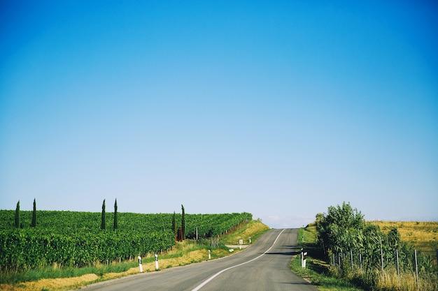 Paisagem típica na croácia istria bela estrada com fileiras de uvas jovens no campo
