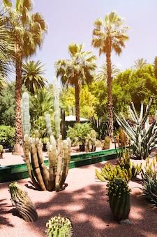 Paisagem tropical com palmeiras e cactos