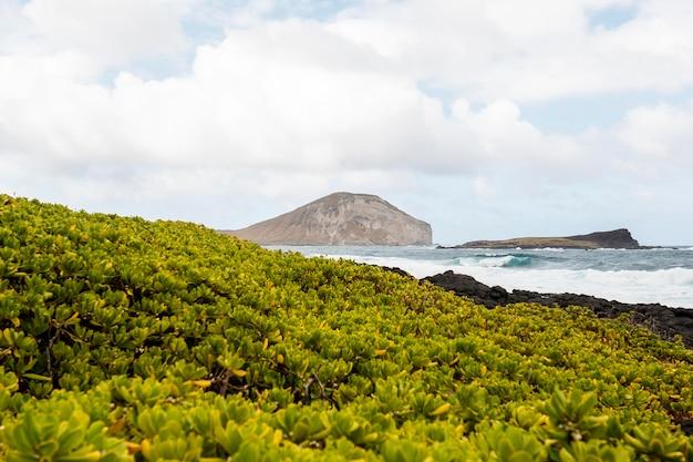 Paisagem tropical do havaí com mar azul