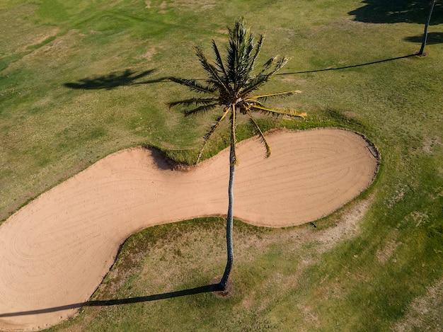 Paisagem tropical do havaí com palmeiras Foto gratuita