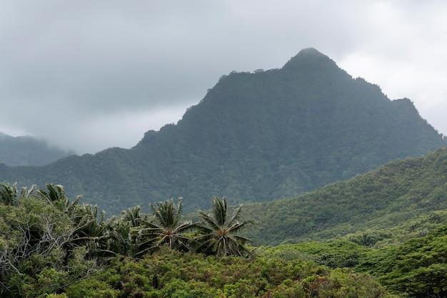 Paisagem tropical do havaí com palmeiras Foto Premium