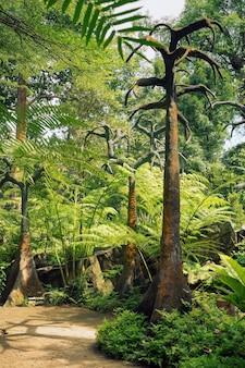 Paisagem tropical no famoso jardim botânico de cingapura