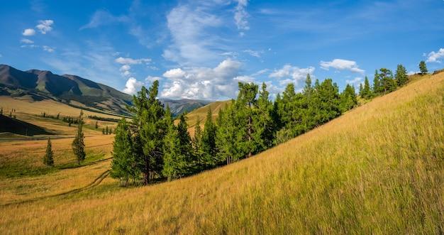 Paisagem verde atmosférica com árvores nas montanhas. um grupo próximo de árvores coníferas verdes em um planalto contra o pano de fundo das montanhas alpinas com um céu azul.