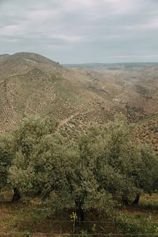 Paisagem verde com muitas árvores verdes e montanhas sob as nuvens de tempestade