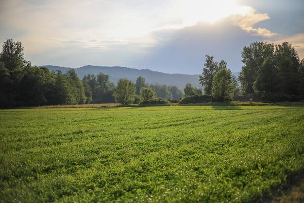 Paisagem verde de campina de verão