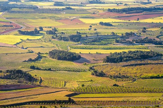 Paisagem vertical de vinhedos verdes em la font de la figuera toscana valenciana espanha