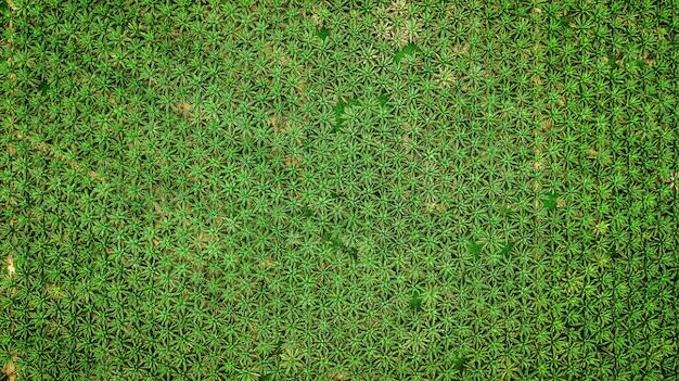 Paisagem vista aérea, de, árvore palma, em, krabi, tailandia