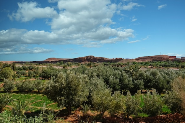 Paisagem vista do campo de cultivo no oásis