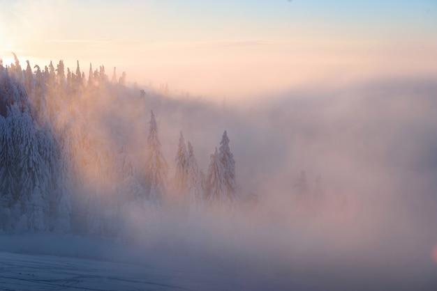 Paisagens de inverno das montanhas dos cárpatos, com nevoeiros e árvores nevadas e raio de sol