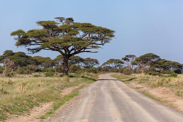 Paisagens do quênia, uma estrada fica em um parque nacional serengeti, uma árvore de acácia perto de uma estrada
