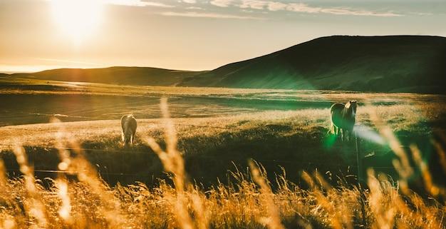 Paisagens islandesas