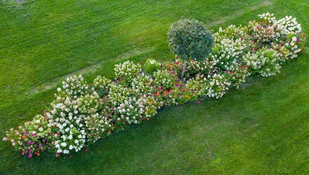 Paisagismo, canteiro de flores com hortênsias coloridas florescendo na grama verde.