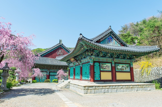 Palácio gyeongbokgung com flores de cerejeira na primavera, coreia