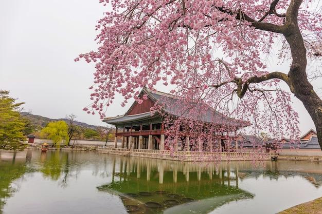 Palácio gyeongbokgung com flores de cerejeira na primaveraseoulsul coréia