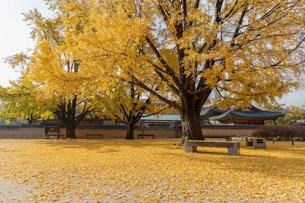 Palácio gyeongbokgung no outono de seul, coreia do sul