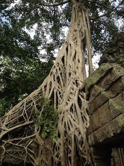 Palácios de anckor, siem reap, camboda. lindo paraíso.