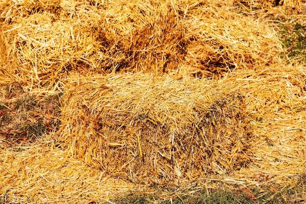 Palha ceifada no campo embalada em fardos quadrados fardos quadrados de feno dourado empilhados em uma grande pilha