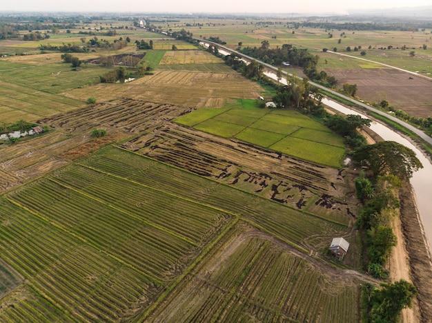 Palha de arroz queimada no campo da agricultura