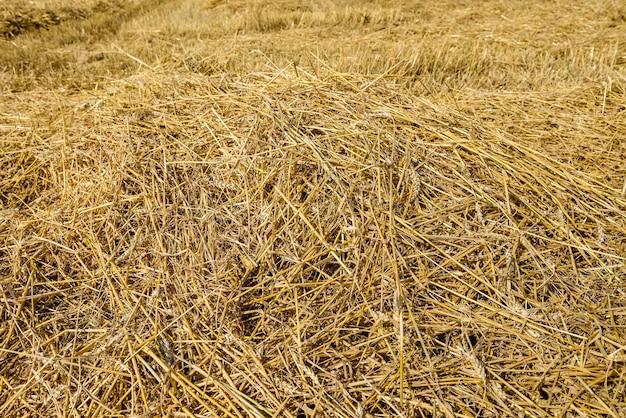 Palha dourada em campo com traço de máquina no solo