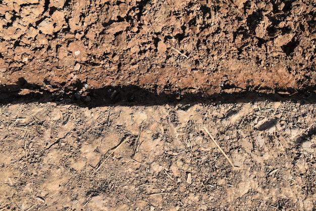 Palha e caroço de terra em campo de arroz antes de arroz de planta