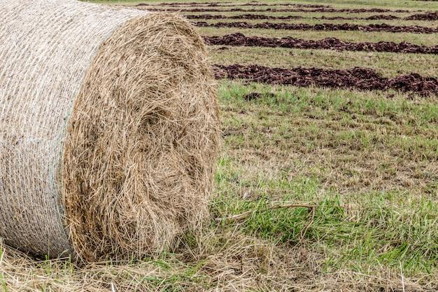Palheiro após a colheita