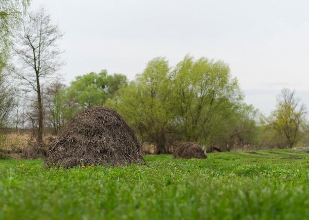Palheiro em um prado de primavera