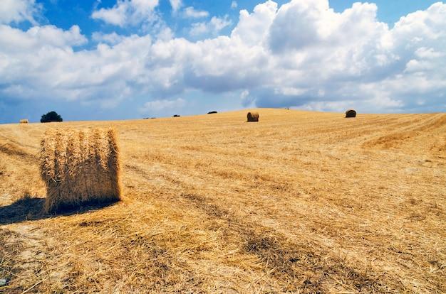 Palheiro no campo em chipre