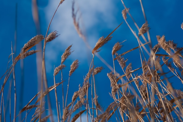 Palhetas no céu azul
