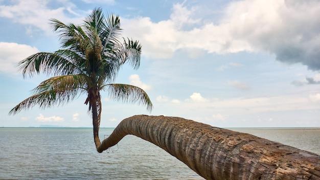 Palm em um fundo de vista para o mar. phangan. tailândia